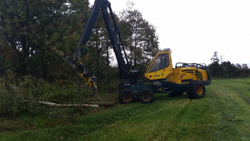 Brdr Willemoes Skovservice har travlt med tynding af læhegn