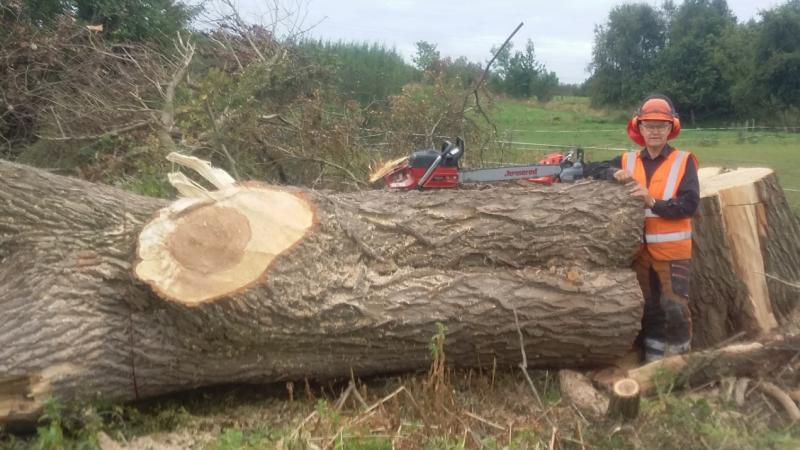 Brdr Willemoes Skovservice på læhegnsopgave i Fredericia